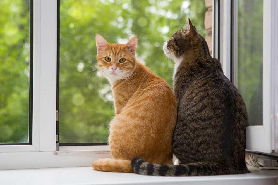 Cual es el pais donde sus habitantes aman más a sus gatos?